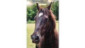 Stockphoto Brown horse with sun